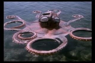 TarkanOctopus