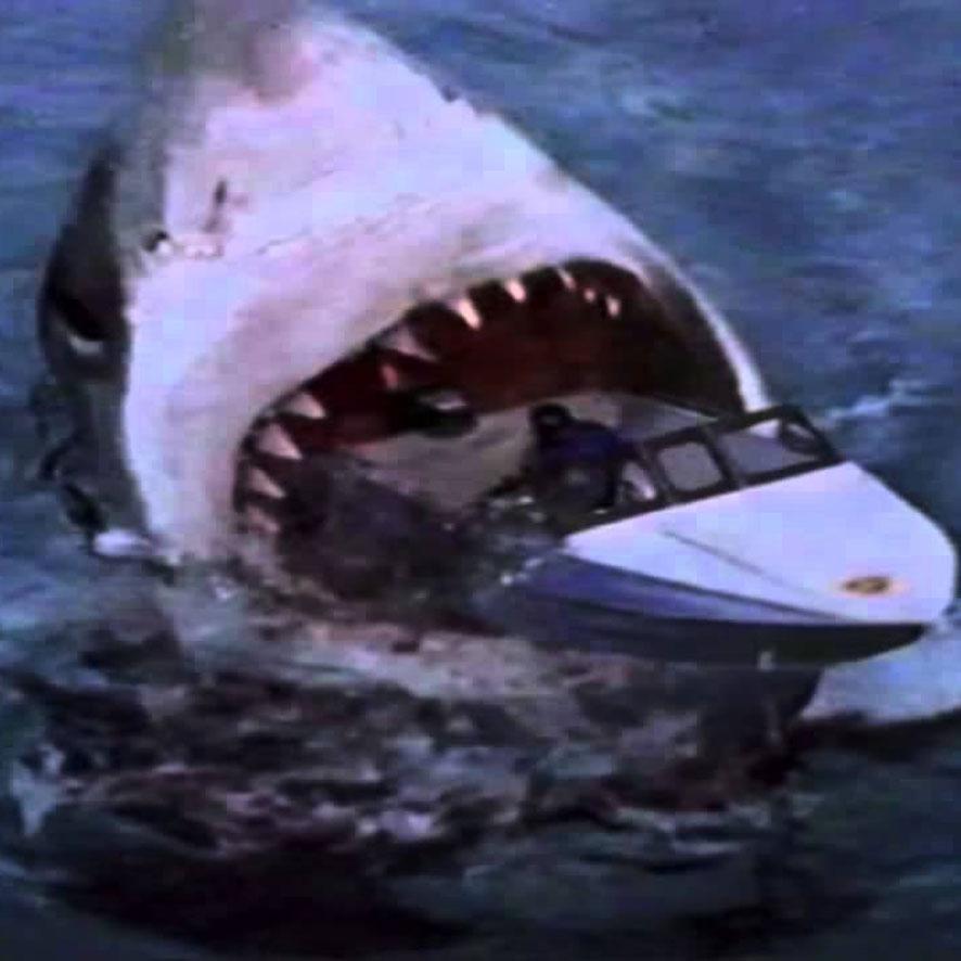 megalodon shark attack - 886×886